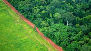 Image result for Growing human population puts more pressure on forests