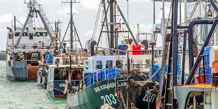 NZ fishing industry supports on-board observers | Intrafish